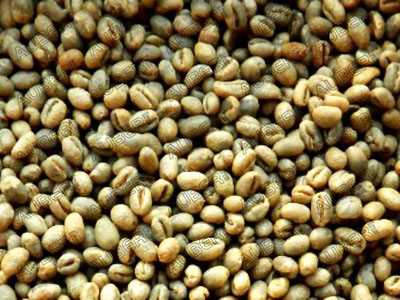 100% Jamaica Blue Mountain Peaberry Green Coffee Beans,Unroasted